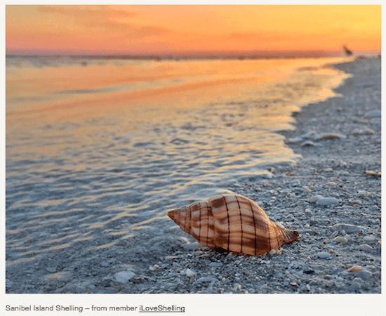 Sanibel Island #1 Among the Top 10 Best U.S. Shelling Beaches