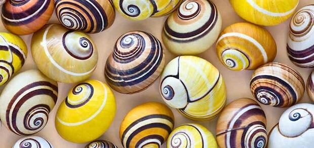 seashells of Sanibel
