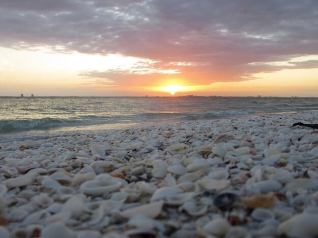 Best shells to be found are at Sanibel Island beach