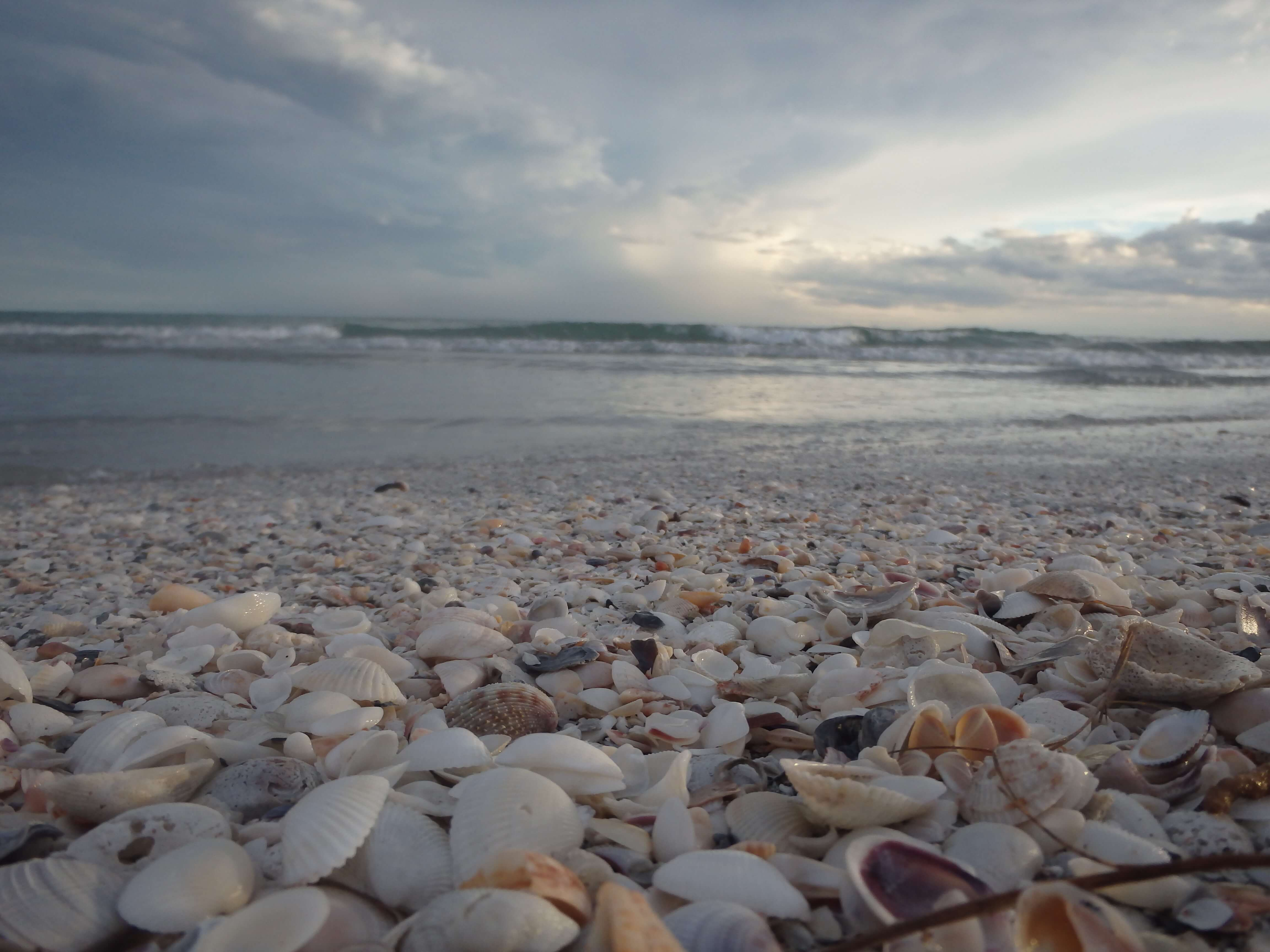Visit Sanibel Island to Find Amazing Shells