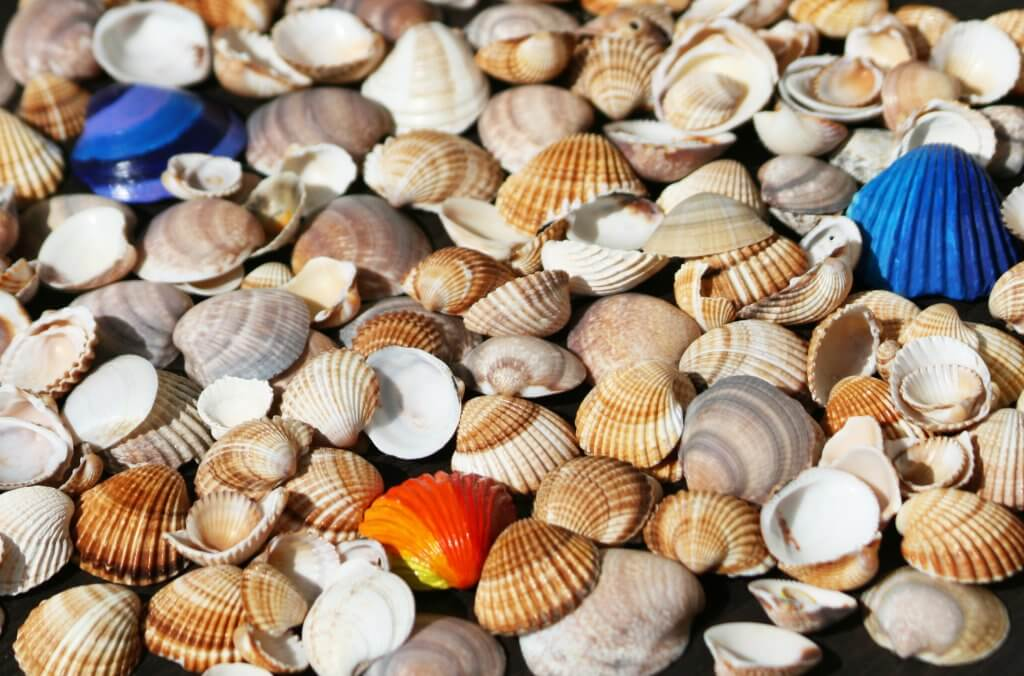 The Painted Shells on Sanibel Island