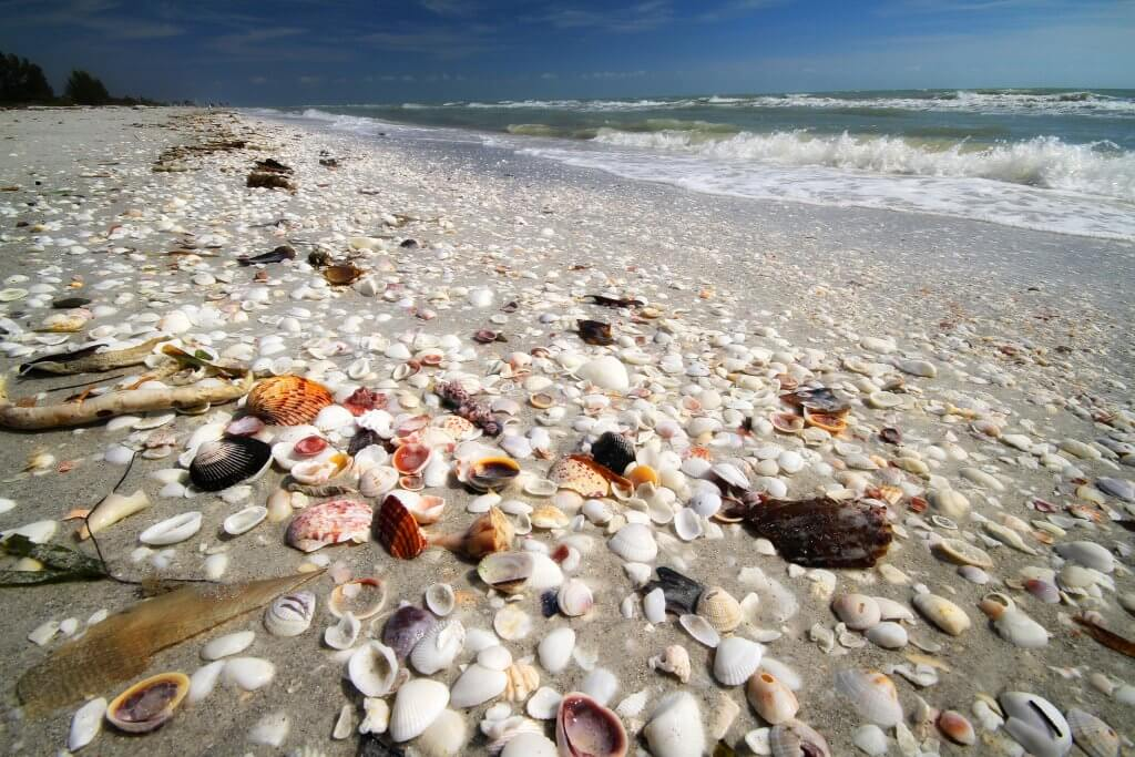 3 Things to do this Summer on your Sanibel Island Vacation sanibel island shells