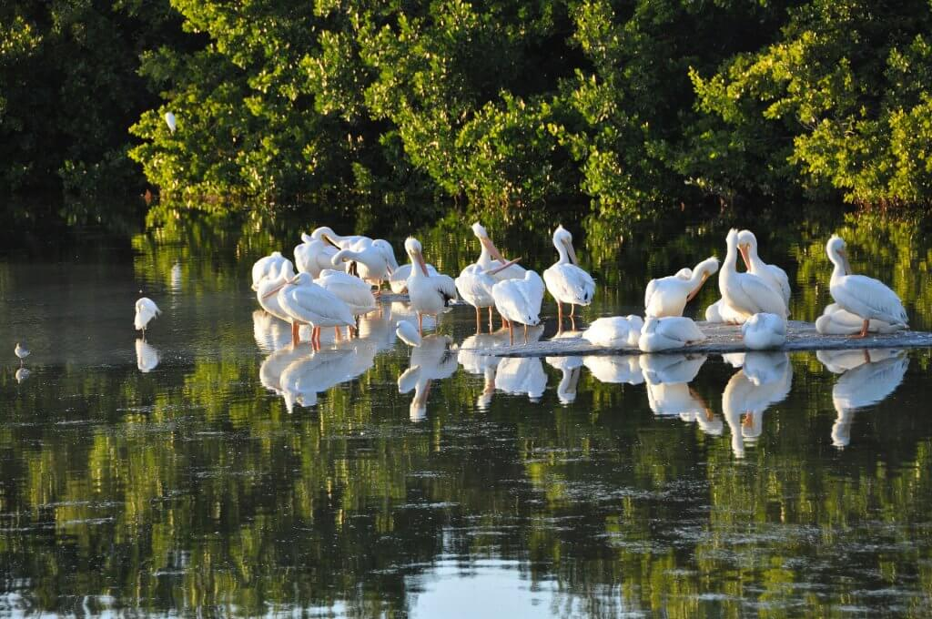 3 Things You Can't Miss on your Next Vacation to Sanibel Island sanibel island 707081 1920