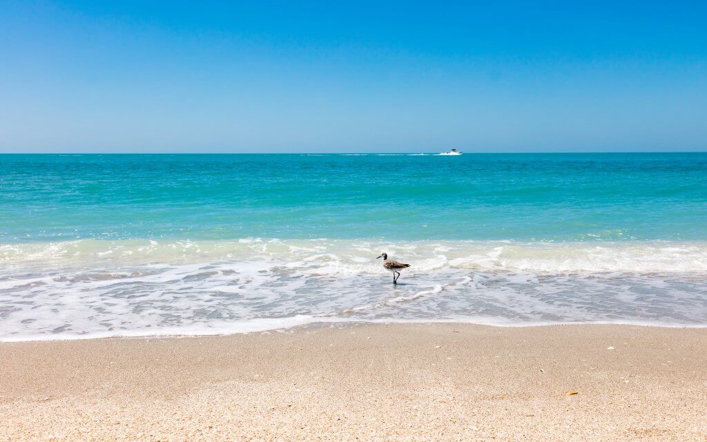Beach and sand, water and ship, bird and blue sky, seagull in water, Sanibel Island, Florida